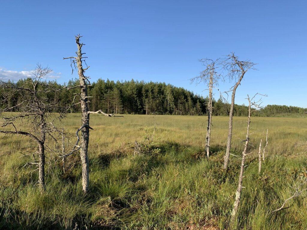 Типы болот в Сестрорецком заказнике