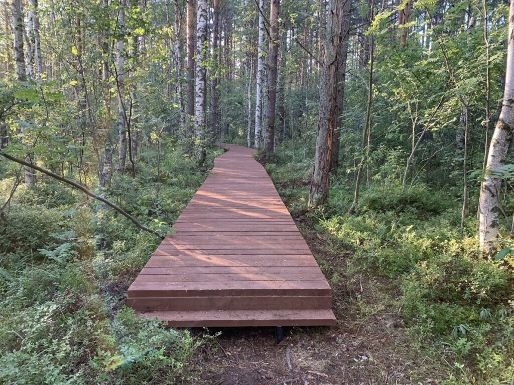Деревянный настил в конце экотропы Сестрорецкое болото