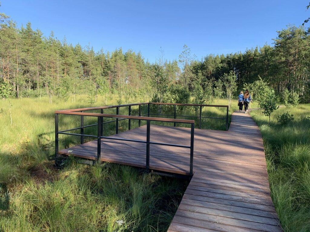 Обзорная площадка на экотропе Сестрорецкое болото