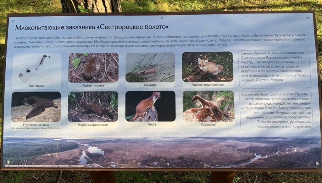 Информационный стенд про млекопитающих заказника Сестрорецкое болото