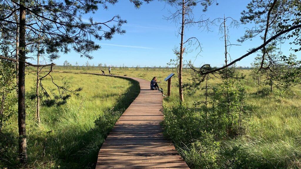 Экотропа Сестрорецкое болото