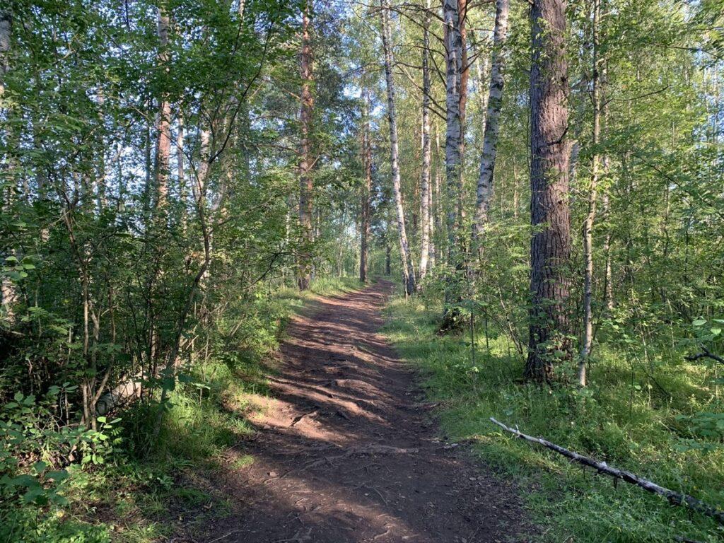 Экологический маршрут Сестрорецкое болото начало