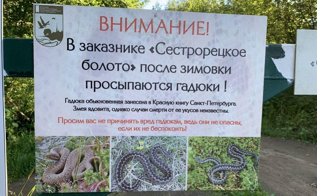 Змеи на экотропе Сестрорецкое болото