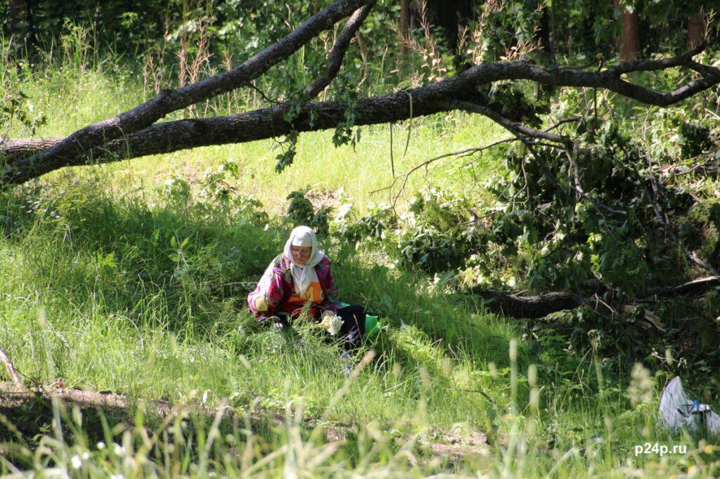 Бабушка собирает лечебные травы в парке Сергиевка