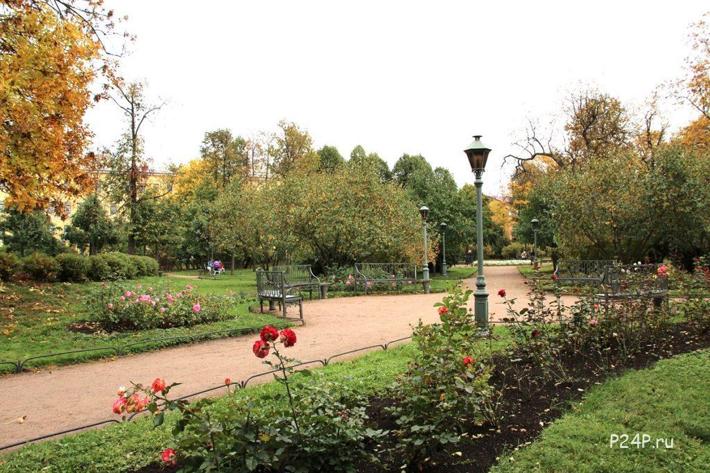 Розы сорт Александр Пушкин в Польском саду при усадьбе Державина